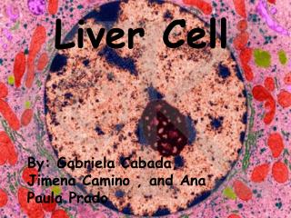Liver Cell