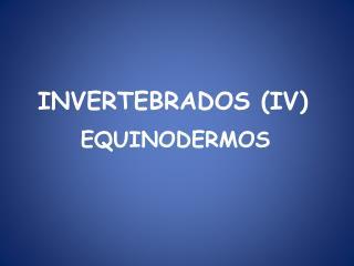 INVERTEBRADOS (IV)