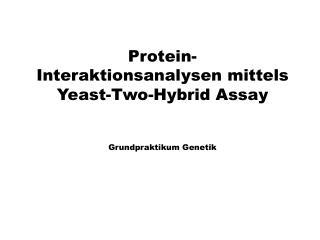 Protein-Interaktionsanalysen mittels   Yeast - Two -Hybrid Assay Grundpraktikum Genetik