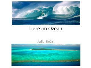 Tiere im Ozean