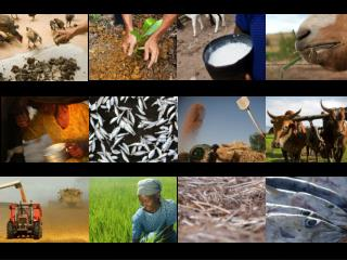 OPERATING SUSTAINABILITY IN FOOD AND AGRICULTURE
