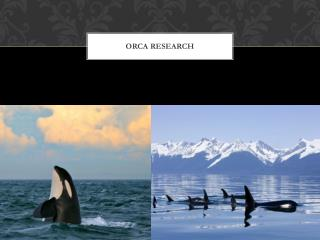Orca research