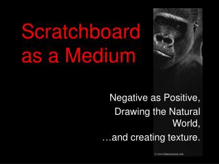 Scratchboard  as a Medium