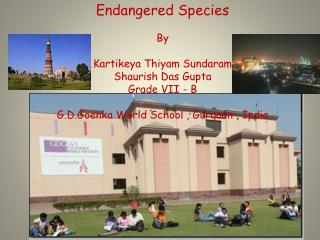 Endangered Species By  Kartikeya Thiyam Sundaram Shaurish Das Gupta  Grade VII - B