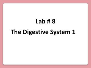 The Digestive System 1