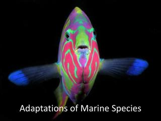 Adaptations of  Marine  Species