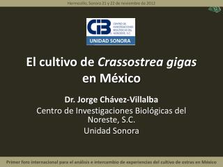 El cultivo de  Crassostrea  gigas  en México