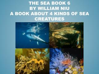 THE SEA BOOK 6 BY WILLIAM NIU A BOOK ABOUT 4 KINDS OF SEA CREATURES