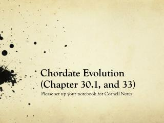 Chordate Evolution (Chapter 30.1, and 33 )