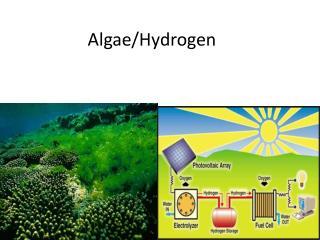 Algae/Hydrogen