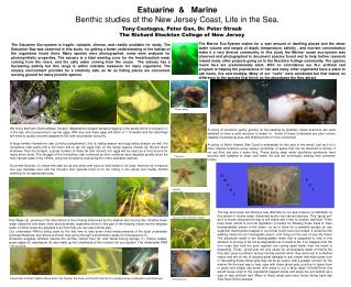 Estuarine  &   Marine Benthic studies of the New Jersey Coast, Life in the Sea.