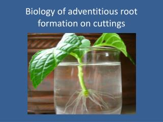 Biology of adventitious root formation on cuttings