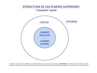 """ESTRUCTURA DE LAS PLANTAS SUPERIORES (""""topografía"""" vegetal"""