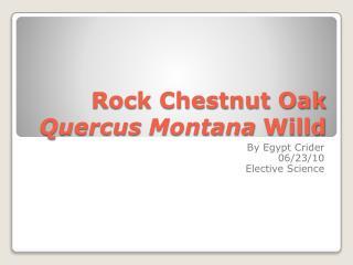 Rock Chestnut Oak Quercus  Montana Willd