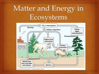 Matter and Energy in Ecosystems