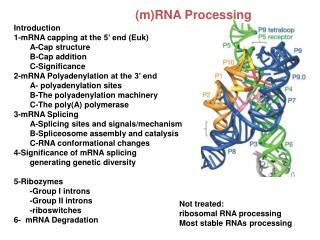 ( m)RNA  Processing