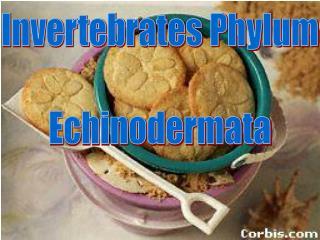 Invertebrates Phylum Echinodermata