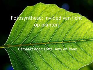 Fotosynthese: invloed van licht op planten