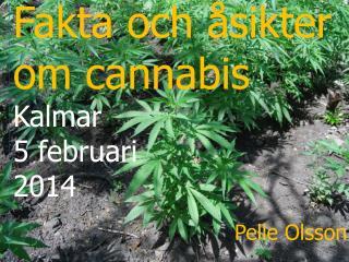 Fakta och åsikter om cannabis   Kalmar 5 februari 2014 Pelle Olsson