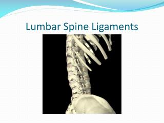 Lumbar Spine Ligaments