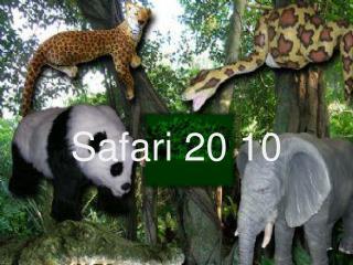 Safari 20 10