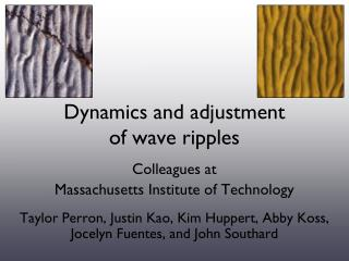 Dynamics and adjustment of wave ripples