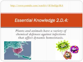 Essential Knowledge 2.D.4: