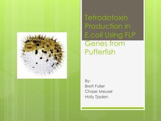Tetrodotoxin  Production in  E.coli  Using FLP Genes from  Pufferfish