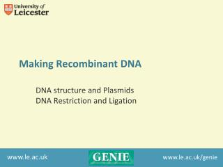 Making Recombinant DNA