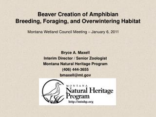 Beaver Creation of Amphibian Breeding, Foraging, and Overwintering Habitat