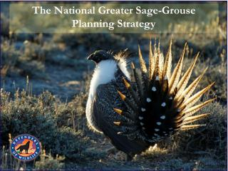 The National Greater Sage-Grouse  Planning Strategy