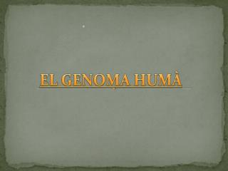 EL GENOMA HUMÀ