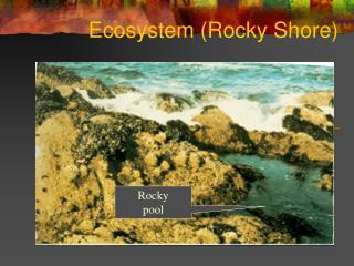 Ecosystem Rocky Shore