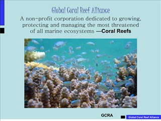 Global Coral Reef Alliance A non-profit corporation dedicated to growing,  protecting and managing the most threatened