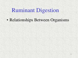 Ruminant Digestion