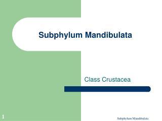 Subphylum Mandibulata