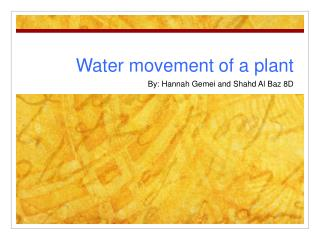 Water movement of a plant