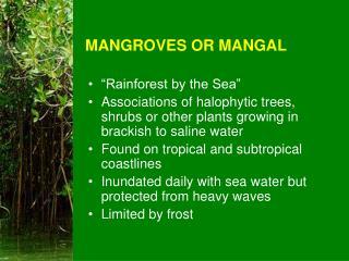 MANGROVES OR MANGAL
