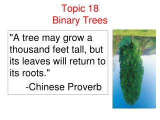 Topic 18 Binary Trees