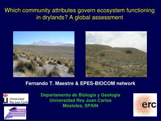 Which community attributes govern ecosystem functioning in drylands? A global assessment