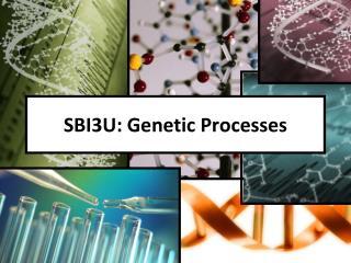 SBI3U: Genetic Processes