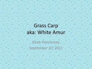 Grass Carp aka: White Amur