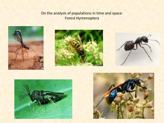 On the analysis of populations in time and space: Forest Hymenoptera