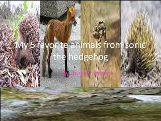 My 5 favorite animals from sonic the hedgehog