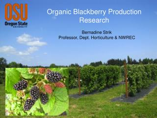 Organic Blackberry Production Research