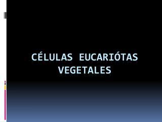 CÉLULAS EUCARIÓTAS VEGETALES