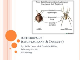 Arthropods  (crustaceans & Insects)