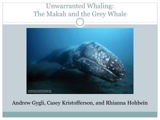 Unwarranted Whaling:  The  Makah and the Grey Whale