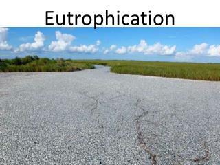 Eutrophication