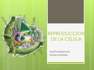 REPRODUCCION DE LA CELULA